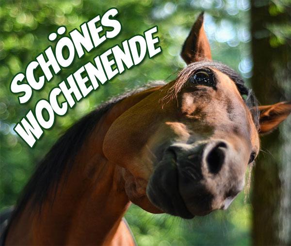 Pferd bringt liebe Grüße
