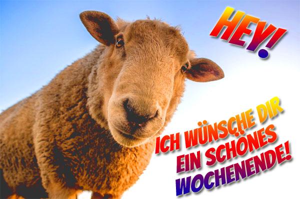 Lustiges Schaf wünsch schönes Wochenende