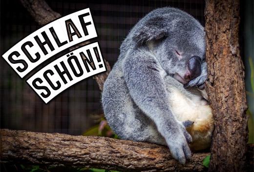 Lustiger Koala wünschte Gute Nacht